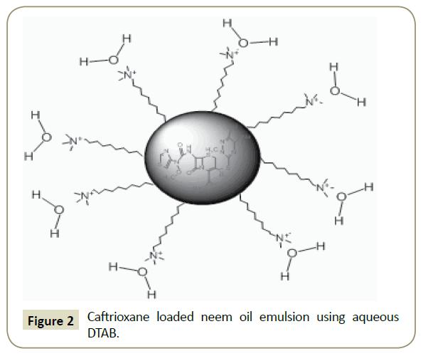 in-silico-in-vitro-pharmacology-neem-oil